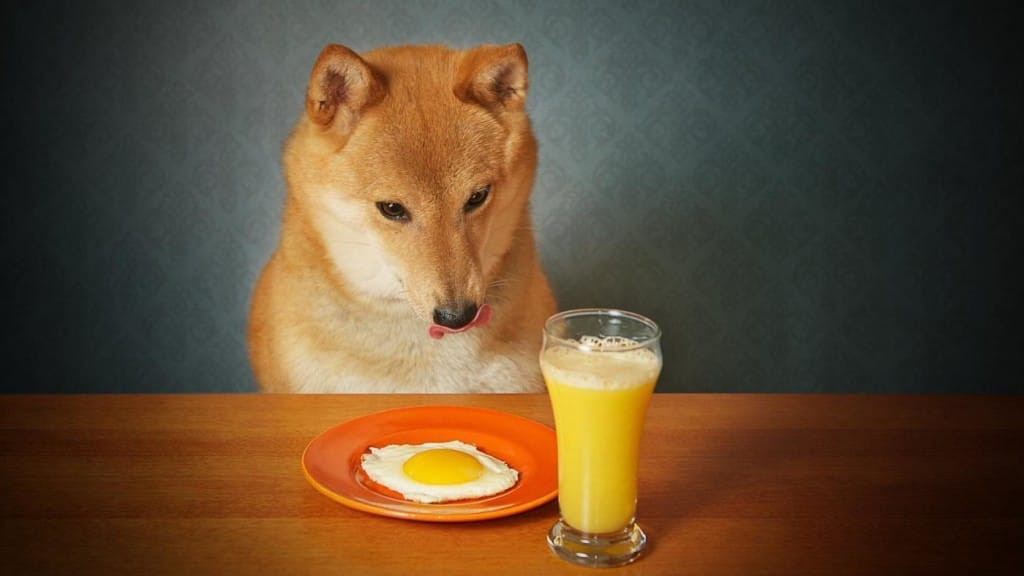 can-dogs-eat-cooked-eggs_baa4e77d6bde704