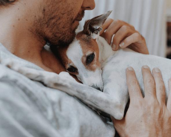 dog-cuddle-87