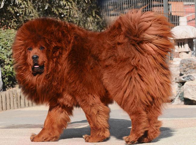 Un Dogu du Tibet