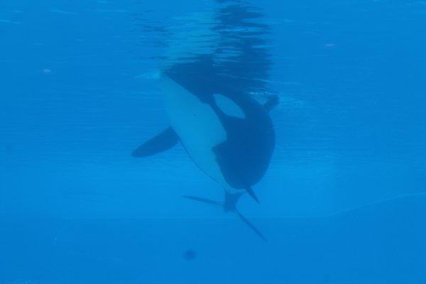 unna-dolphn-2