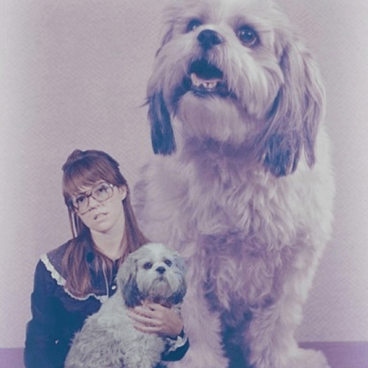wallpaper-dog