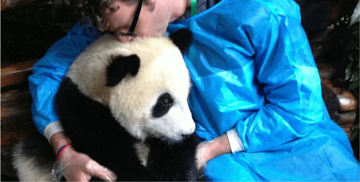 cuddle-pandas-cover-1