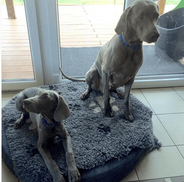 puppy-parents-1