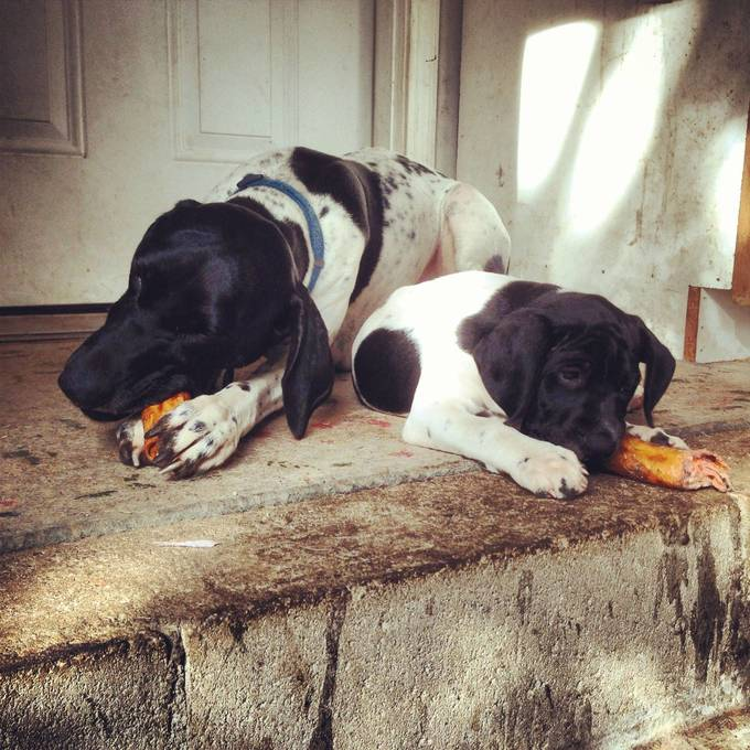 puppy-parents-12