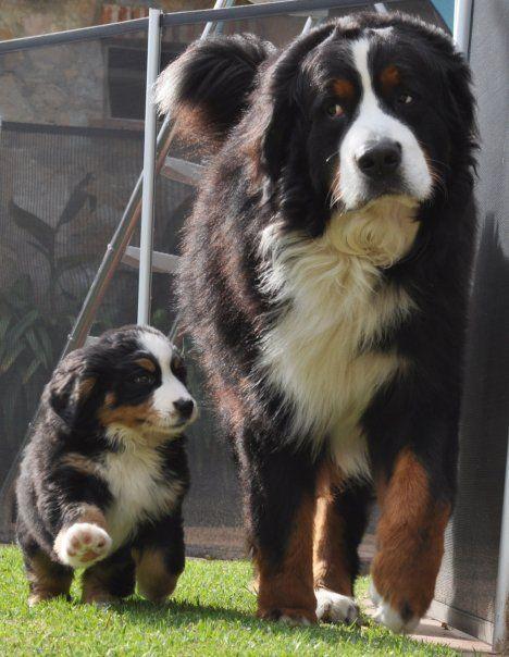 puppy-parents-13
