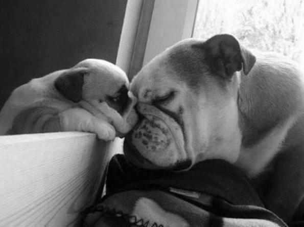 puppy-parents-2