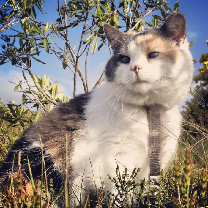 stevie-cat-5