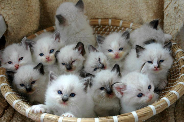 cat-never-adopt-6