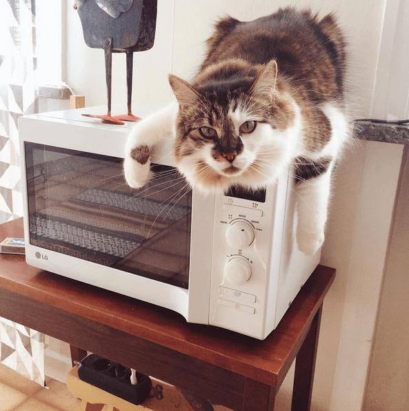 never-adopt-cat-5