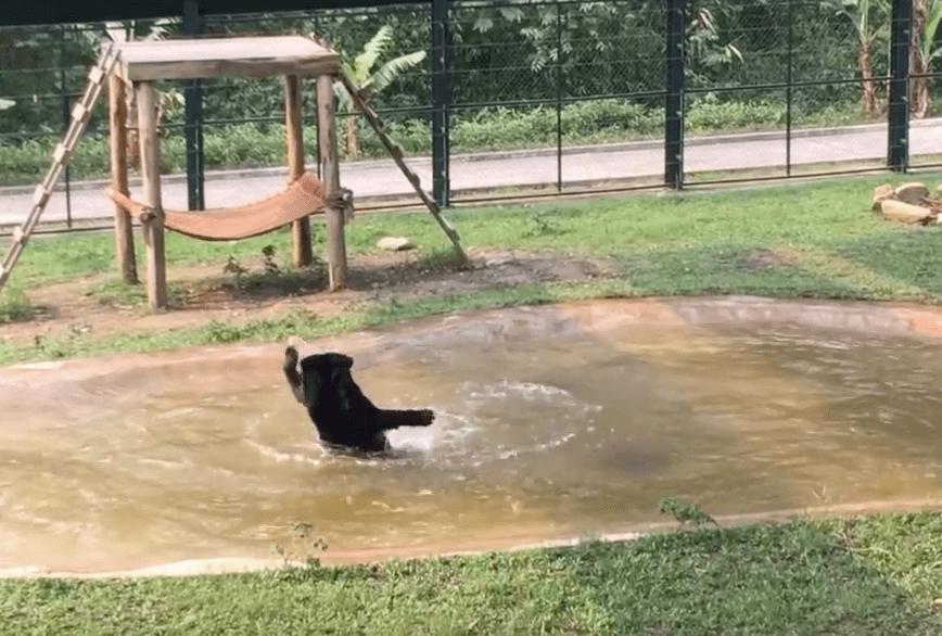 rescued-bear-splashes-4