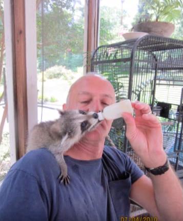 loki-raccoon-friendship-3