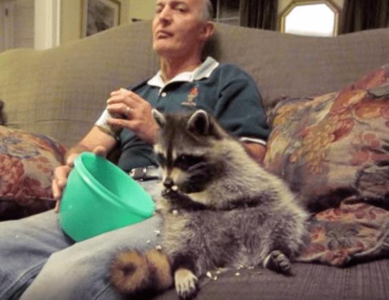 loki-raccoon-friendship-6