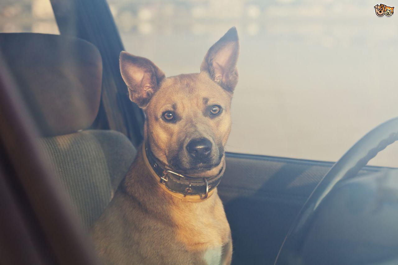 florida-dog-hot-car-3