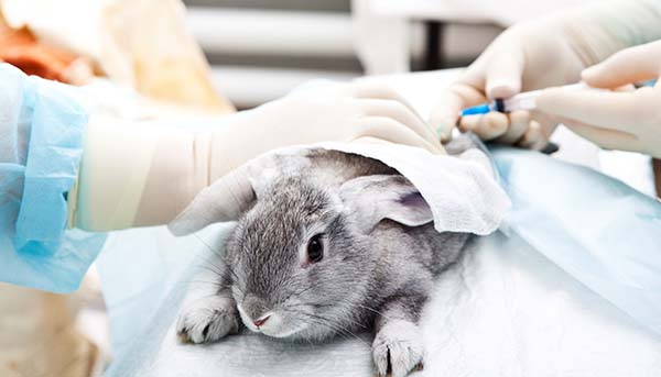 obama-animal-testing-1