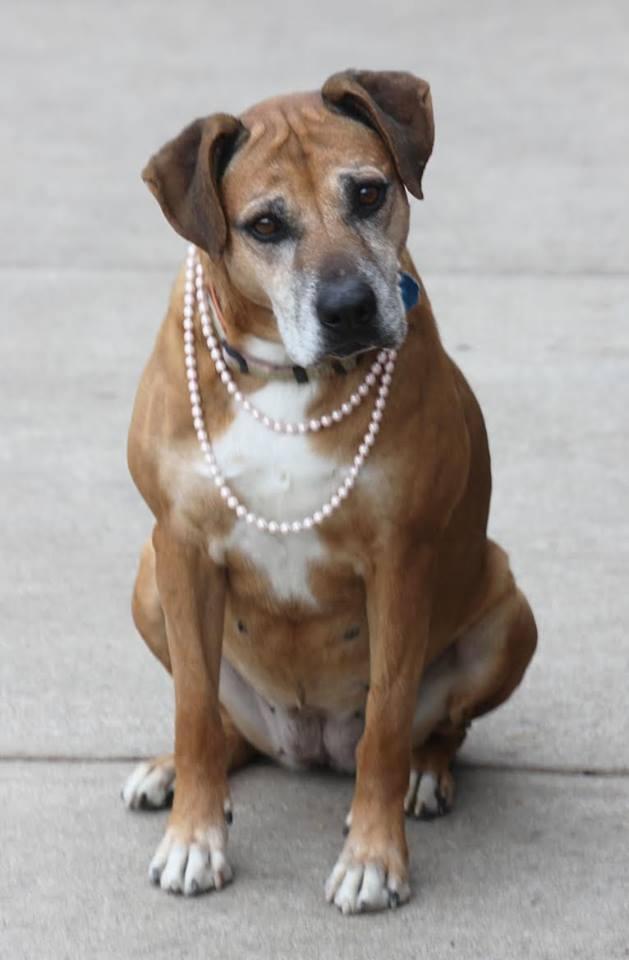 rachel-senior-dog-2