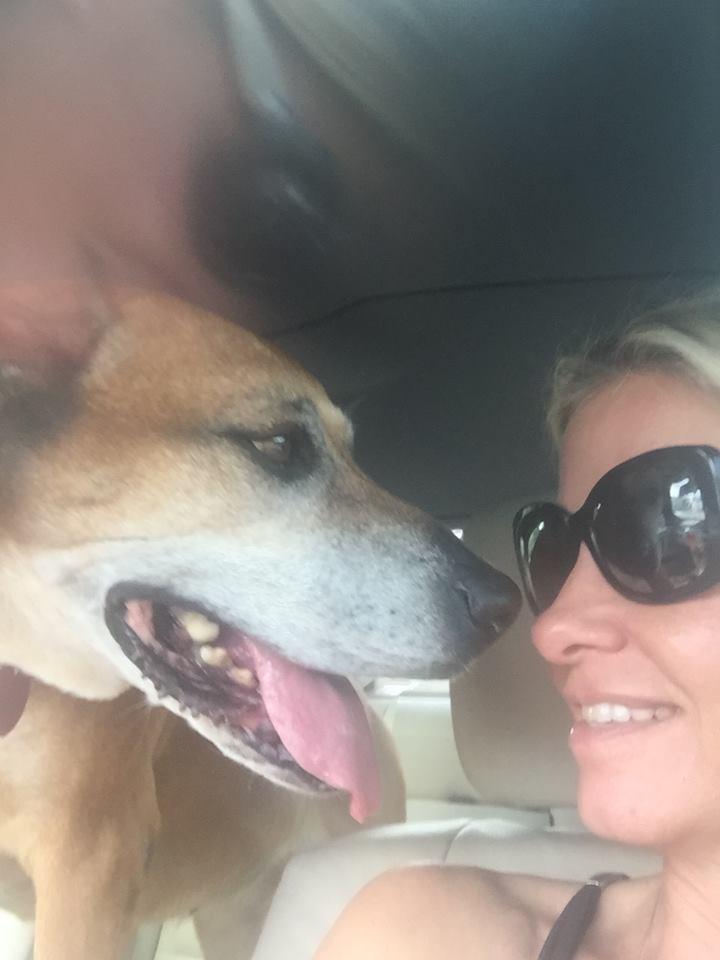rachel-senior-dog-3