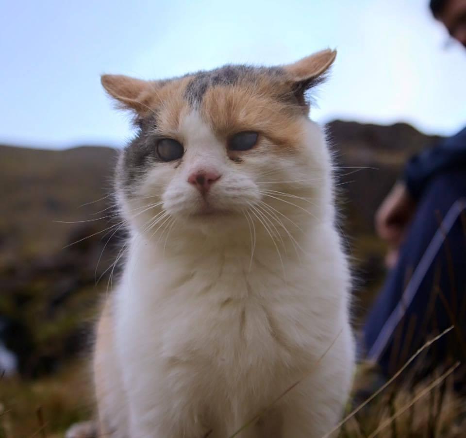 stevie-hiking-cat-1