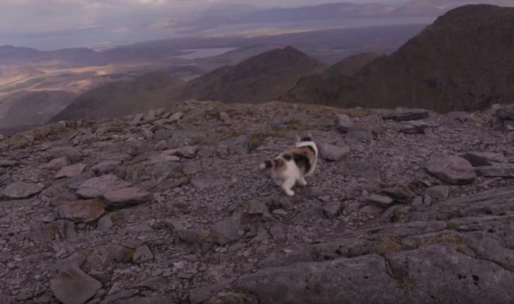 stevie-hiking-cat-6