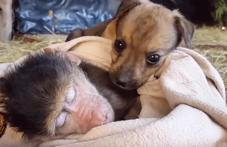 dog-monkey-cuddle-3