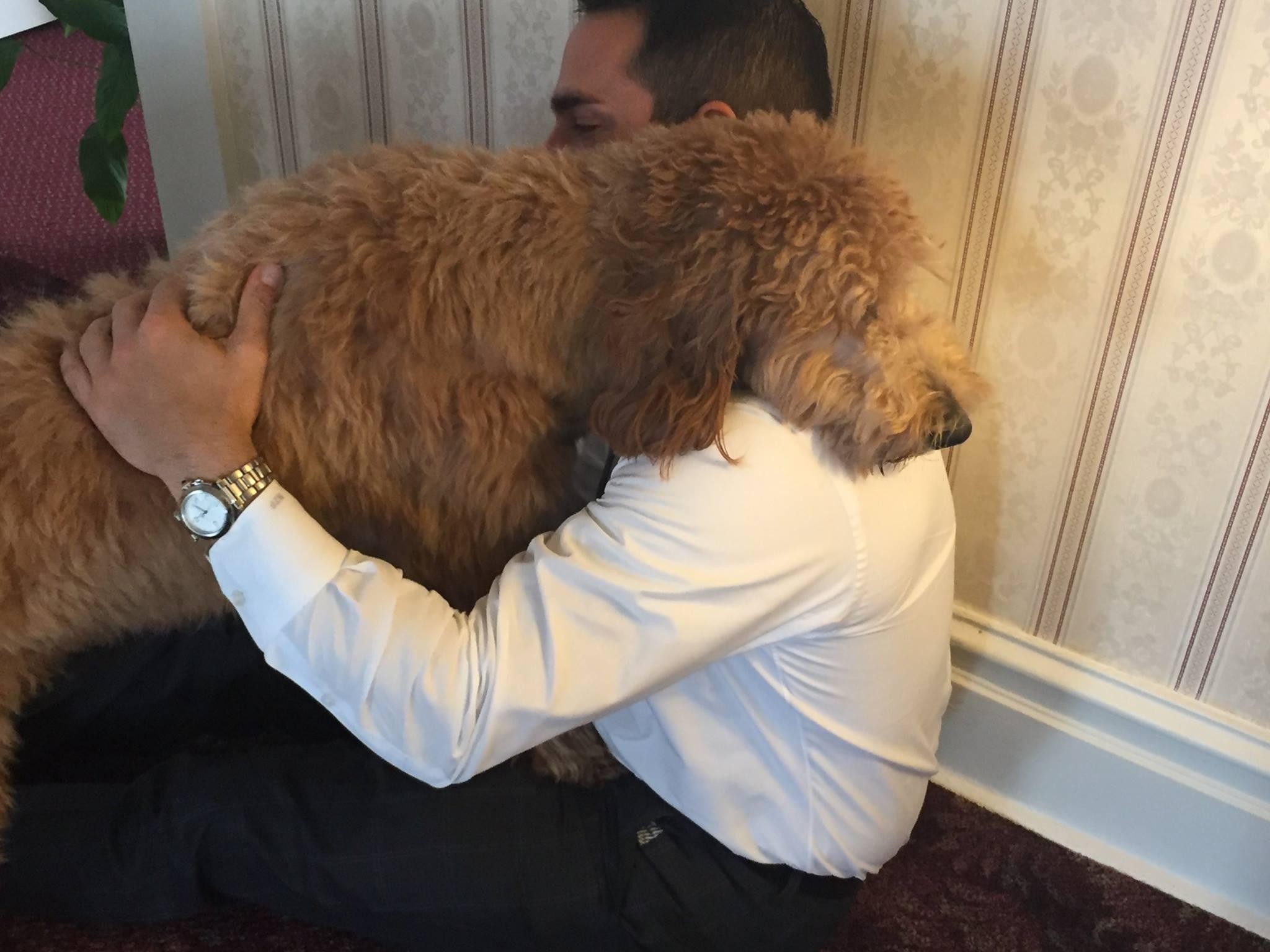 lulu-therapy-dog-3