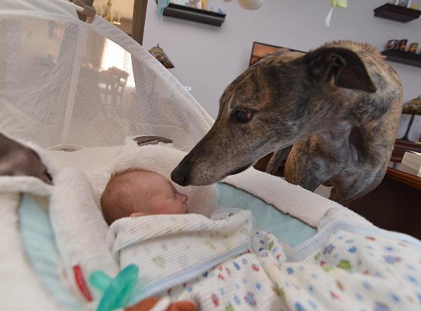 mosley-greyhound-rescue-5