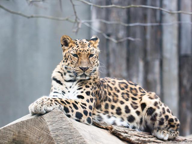 rare-animals-extinction-1