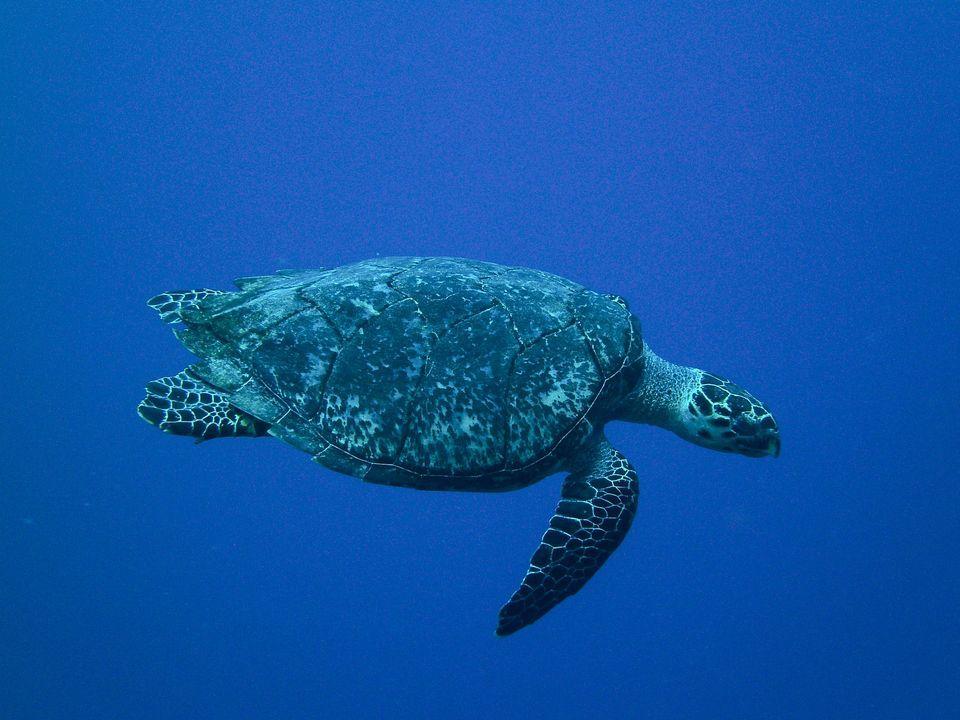 rare-animals-extinction-11