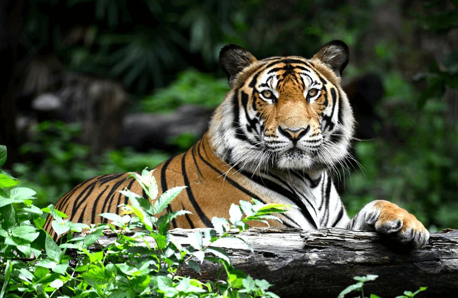 rare-animals-extinction-4