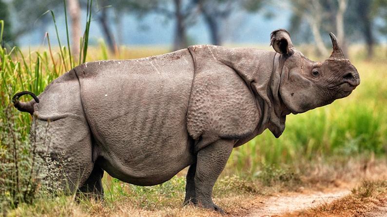 rare-animals-extinction-6