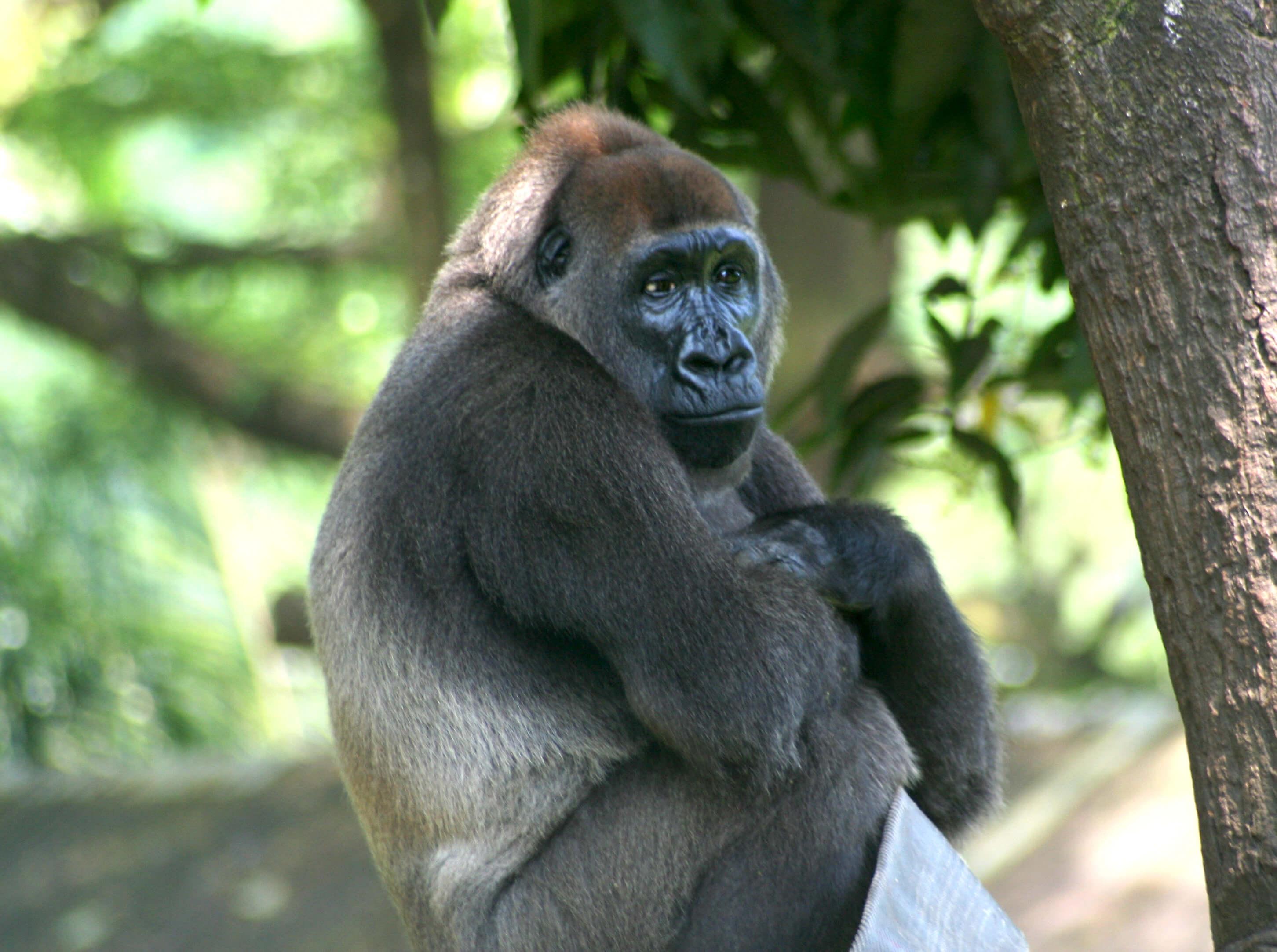 rare-animals-extinction-7