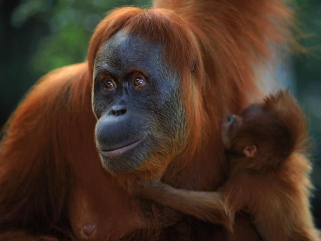 rare-animals-extinction-9