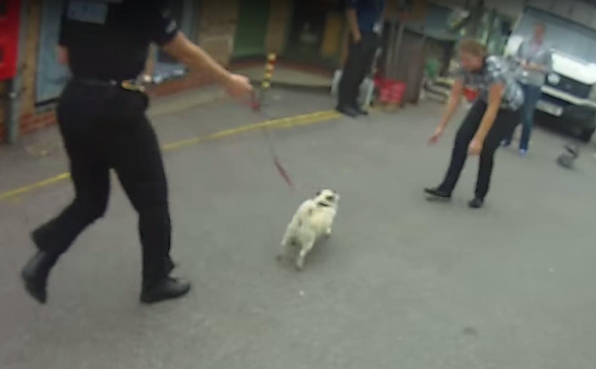 stolen-pug-reunited-2