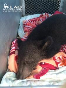 Bear-sammy-rescue-2