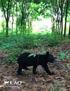 Bear-sammy-rescue-3