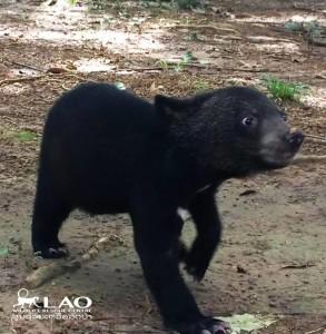 Bear-sammy-rescue-5