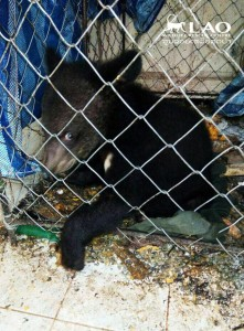 Bear-sammy-rescue-9