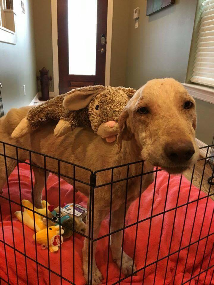 Dog-watson-rescue-5