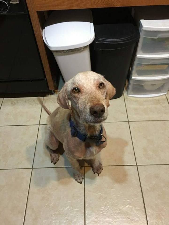 Dog-watson-rescue-6