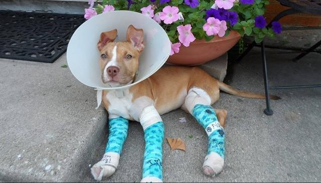 avery-dog-rescue-1