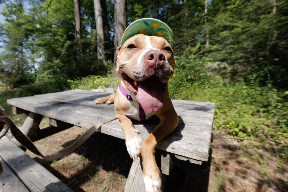 avery-dog-rescue-2