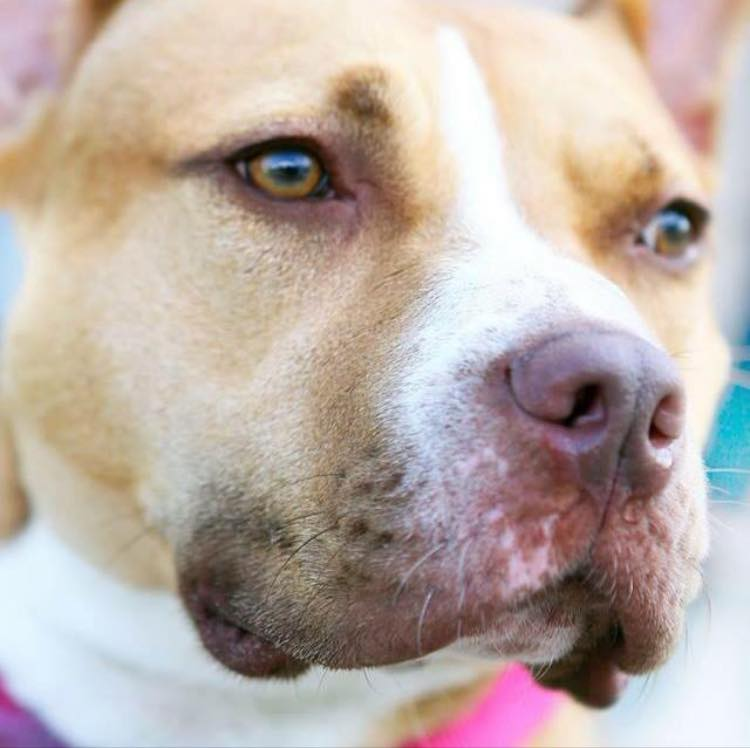 avery-dog-rescue-3