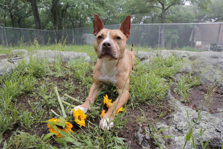 avery-dog-rescue-4