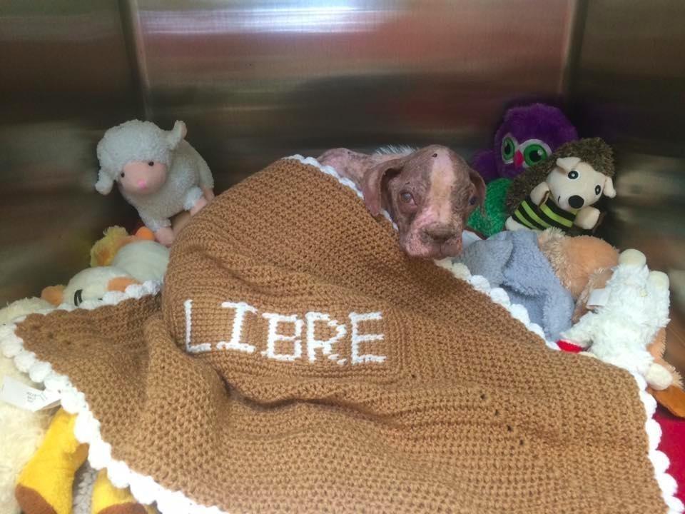 libre-dog-adoption-2