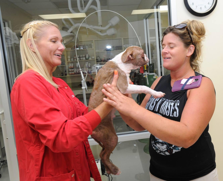 libre-dog-adoption-4