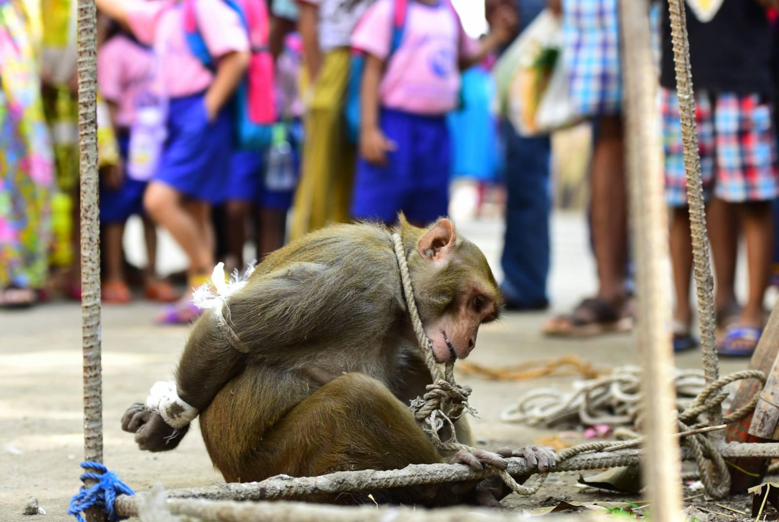 monkey-bound-india-1