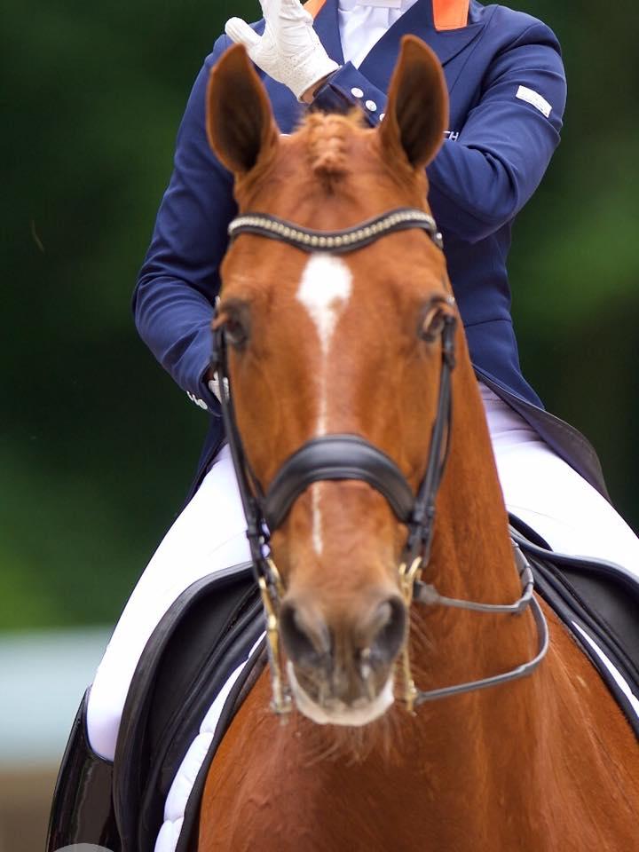 parzival-olympics-horse-1