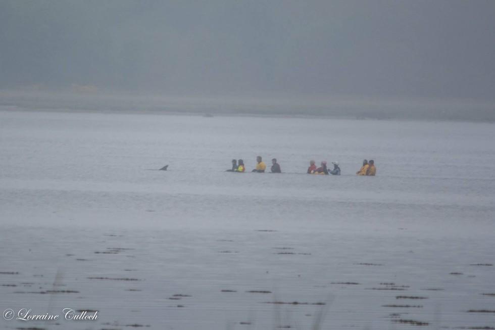 sunburnt-dolphin-rescue-4