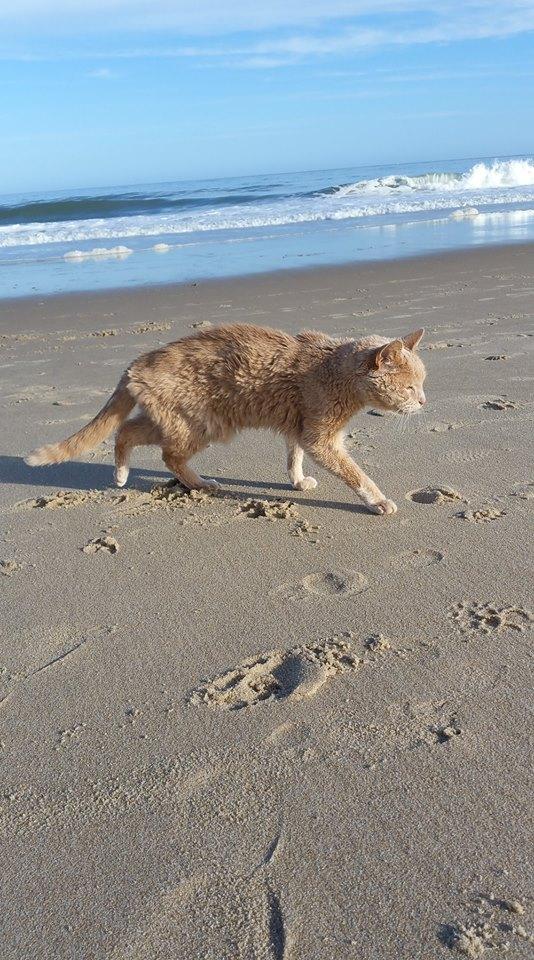 tigger-bucket-list-cat-1