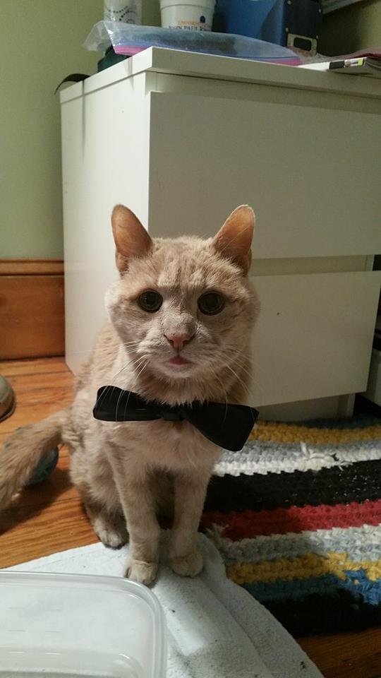 tigger-bucket-list-cat-5
