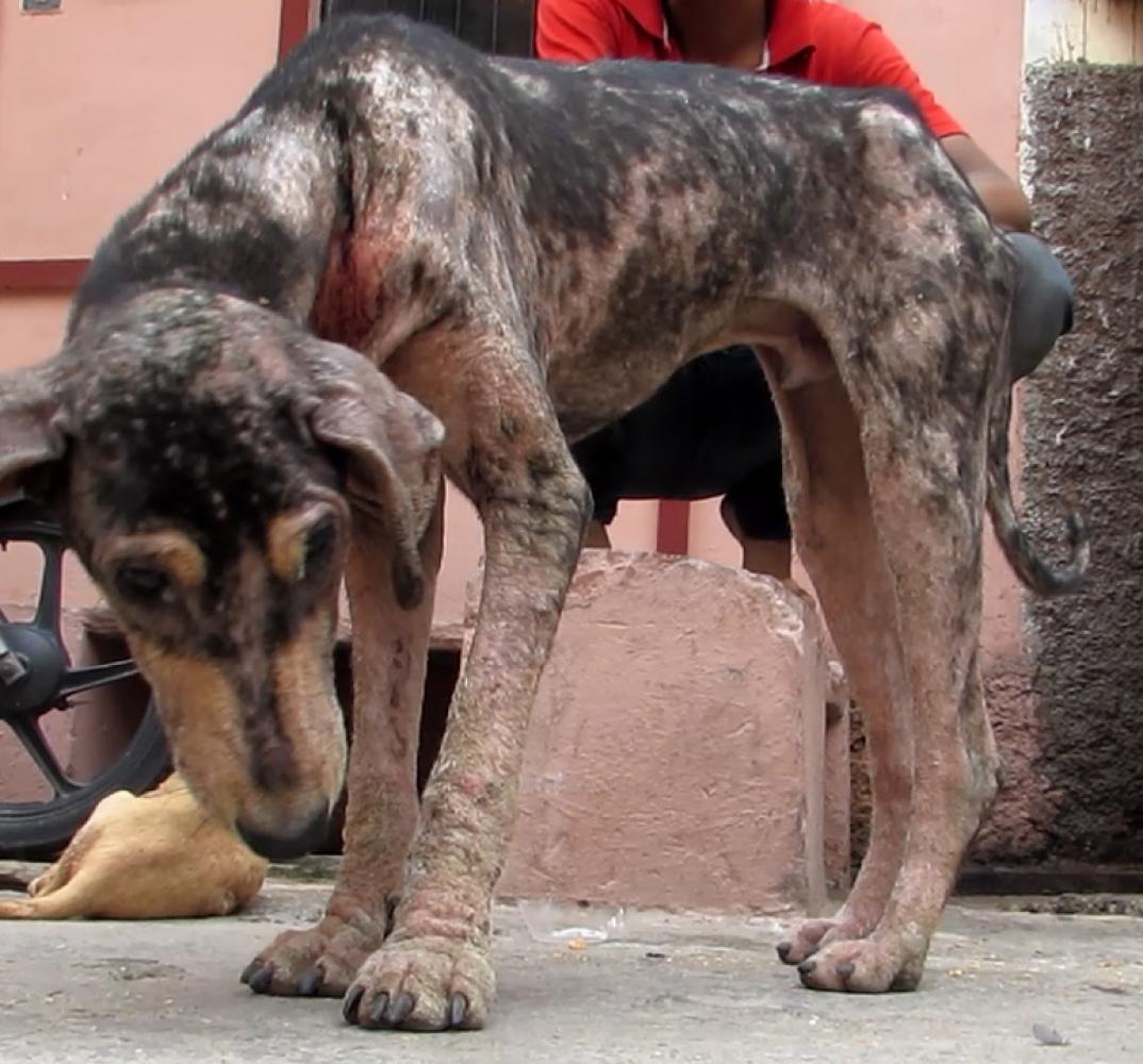 Dog-Lonnie-India-3